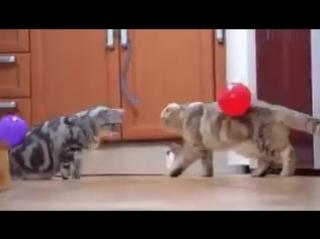 Как занять котов на целый день...