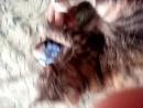 моя кошка играет с телефоном