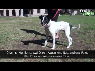Dogs - Super Easy German (9)
