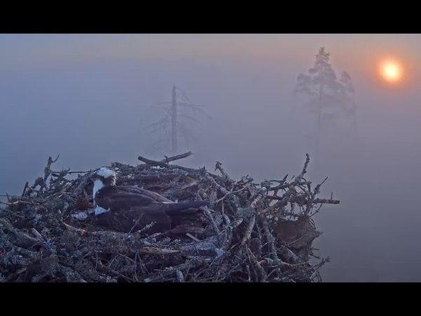 Skaists rīts un putnu dziesmas 2016 05 18