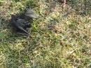 Дачные истории Летучая мышь упала с чердака в клумбу