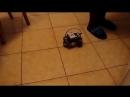 Истории роботов9. Крик кошки (озвучка, 18)