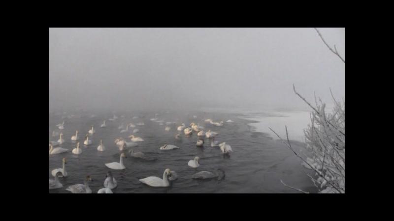 горный Алтай! озеро Светлое! ДЕКАБРЬ 2017!