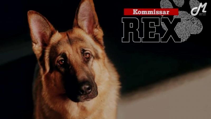 Kommissar Rex - A Good Friend