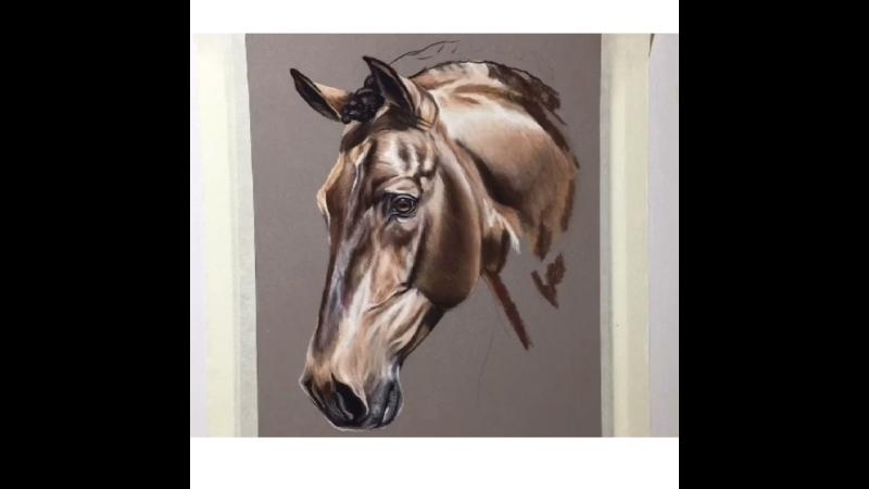 Рисунок лошади пастелью