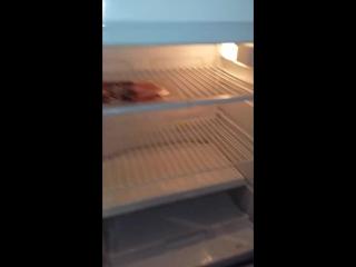 наш веселый холодильник