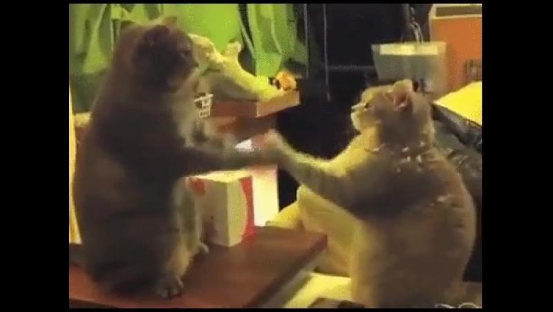 Секретное кошачье рукопожатие...