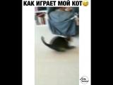 как играет мой кот))