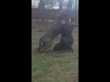 Зева и Анжела-слон и Моська!