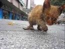 Спаси жизнь Посвящается всем бездомным животным