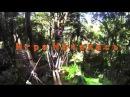 Тайланд. Ко Чанг. Веревочный парк. Thailand. Ko Chang. TREE TOP. ADVENTURE PARK.