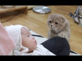 Funny Curious Cats Meeting Newborn Babies For The First Time - Cute Cat and Baby Videos