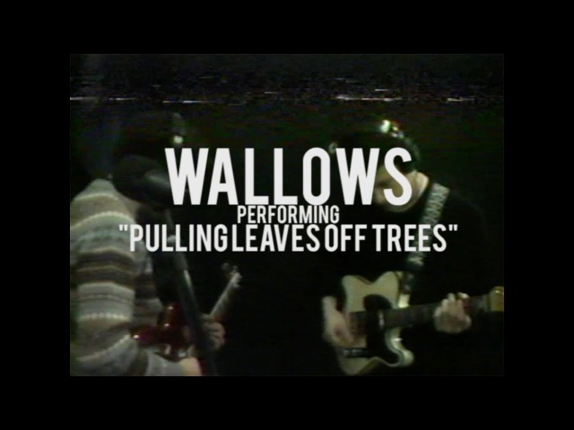 Wallows - Pulling Leaves Off Trees - Live at North Dwarf Records