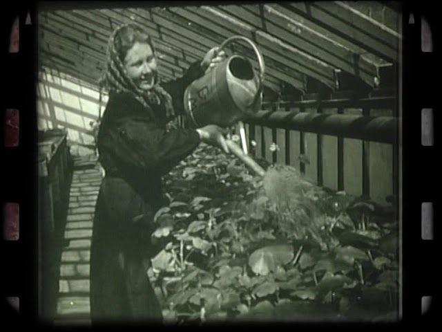 Історія збережена в кінокадрах: Весна 1961 року у Полтаві