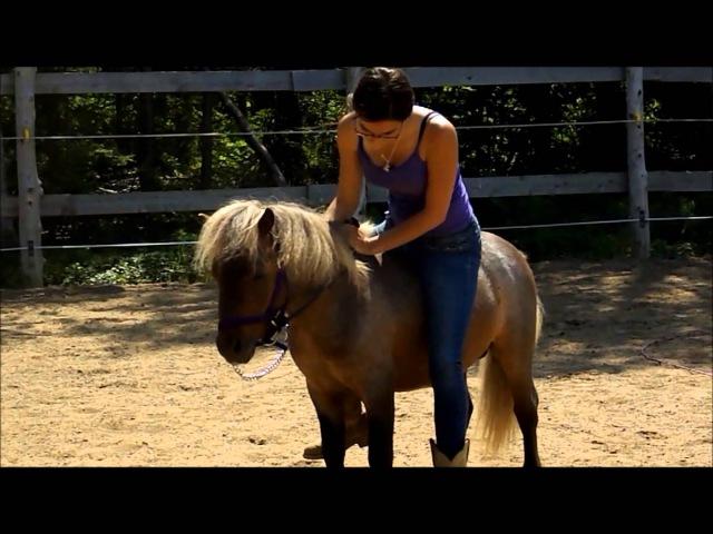 Debut debourrage du petit poney, Gypsy