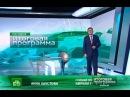 Окончание программы Сегодня Итоговая программа 02.06.13