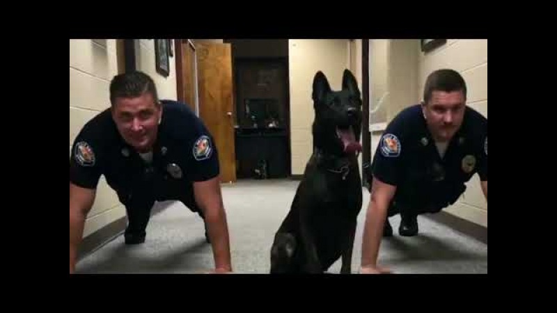 Adorable K 9 Dog Cop Does Push Ups with Two Other Officers