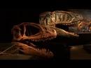 Динозавры Музей естествознания Берлин