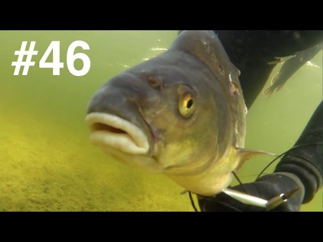Подводная охота, озеро - большой ЛЕЩ, линь, щука