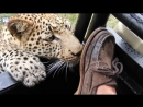 Moment tourist experiences close encounter with young leopard Daily Mail