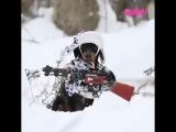 Очень опасный пес