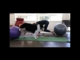 MetDaan Beauty - Trust Practicing a new Doga position!...