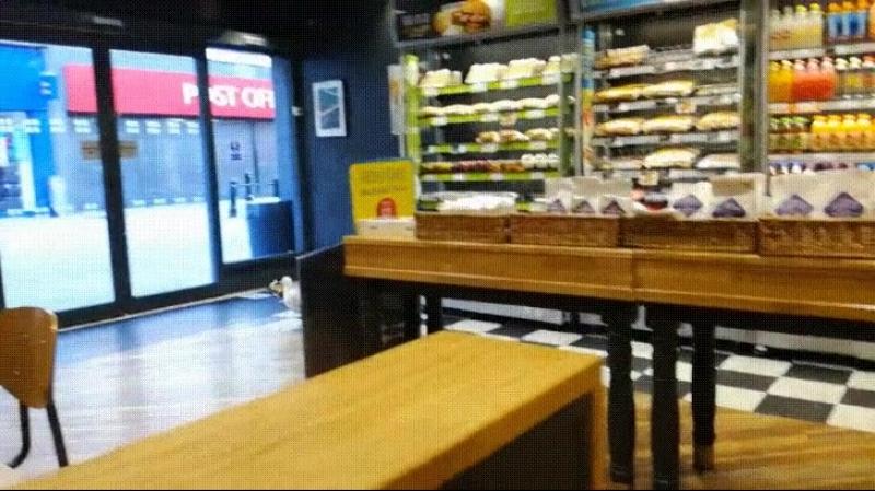 Чайка ворует еду из магазина