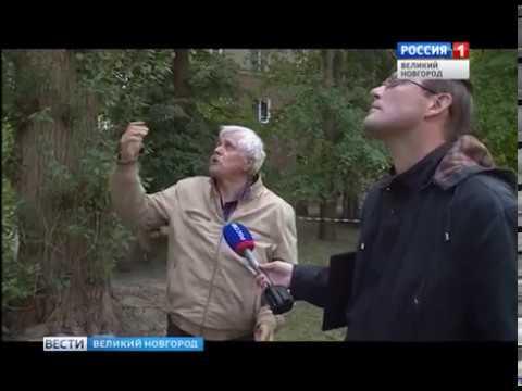 ГТРК СЛАВИЯ Упало дерево на дом 05 06 18