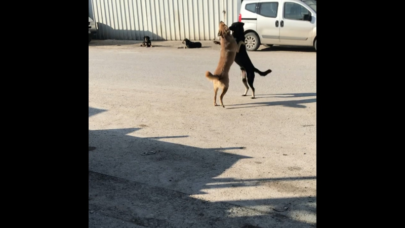 Pazar keyfi köpekler şovu😂😂😂