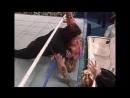 The Undertaker vs Ultimate Warrior Casket Match 1991