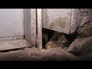 Украинцам по-прежнему тяжело финансировать ремонт своих домов