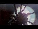 Трансформация Тобе. (Человек-паук 2002)
