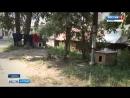 Кто убивает уличных собак в Бийске