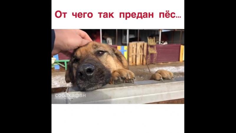 от чего так предан пес