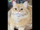 Happy Cats Very talkative kitty 640p
