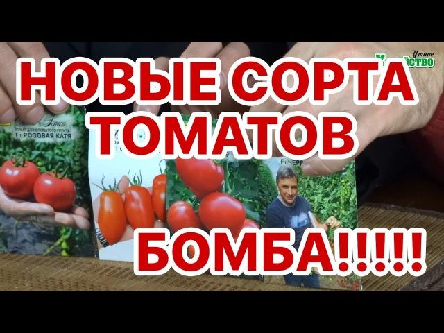 Новые сорта томатов 2018 Семко, сливка. В чем изюминка