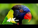 4k hdr demo 60fps wildlife video for 4k oled tv