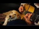 Neil Diamond - Sweet Caroline (Fingerstyle Guitar)