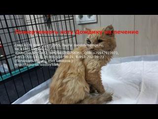 Кот с разбитым черепом ждет помощи | a wounded cat is waiting for help