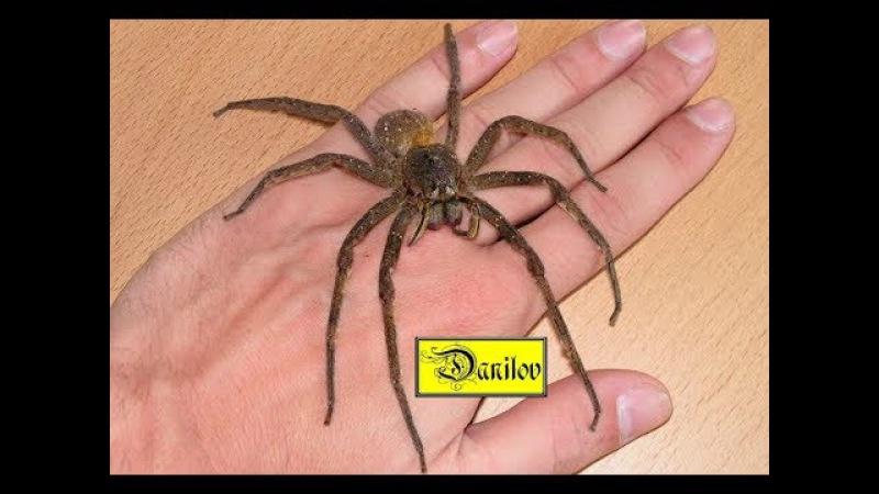 Сегодня залез паук на кухню