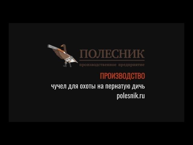 Александр Кудря о чучелах ПОЛЕСНИК