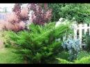 Сорта можжевельников Какие бывают можжевельники Обзор хвойных растений для сада