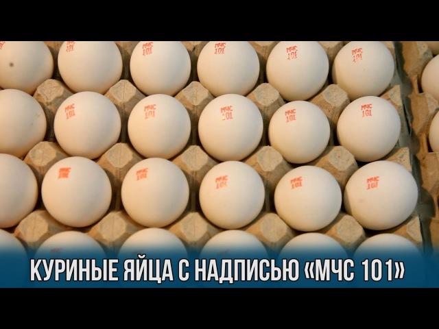 Куриные яйца с надписью МЧС 101 изготовила Городокская птицефабрика