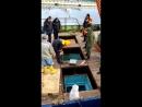 новый вид приёмки рыбы сырца да здравствуют Российская власть и законы
