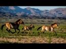 Порода лошади. Монгольская порода лошади.Одни из самых маленьких лошадей с корот