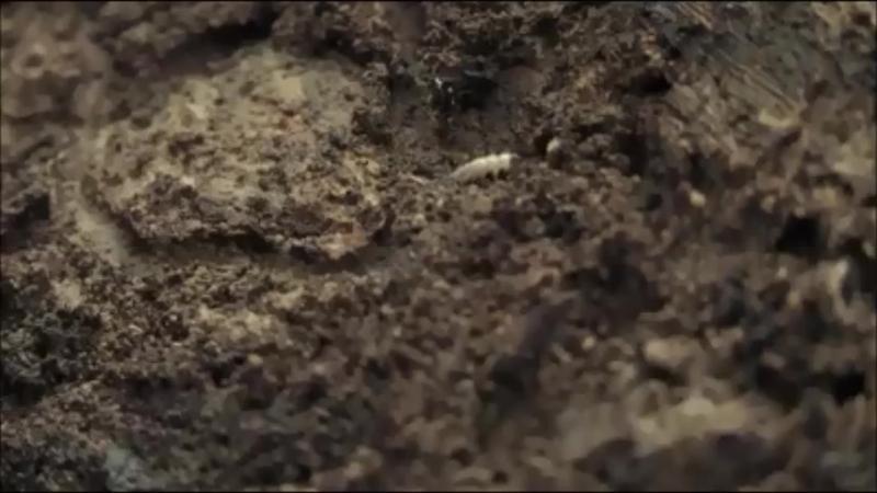 Environnement : La terre se dérobe sous nos pas
