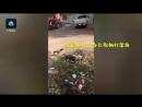 Смелый пёс вмешался в бой петухов в Китае