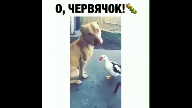 ёд гирен духтаро