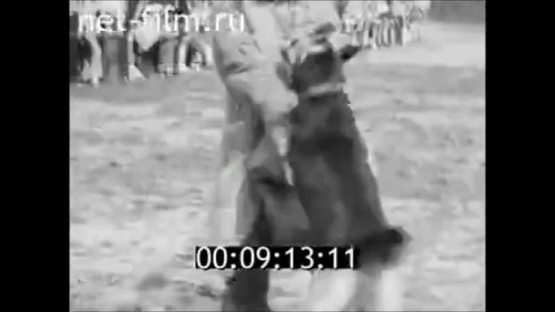 Выставка собак в городе Смоленск. Киножурнал Наш Край 1977 год №28