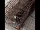 Домвварне друзья поймализверя у себя начердаке это куница западня сработала собака вшоке teremlux